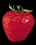 The Strawberry - TM - 1125 downloads